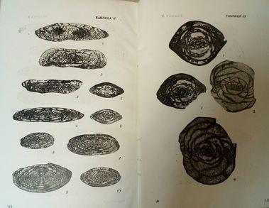 http://book.uraic.ru/blog/wp-content/gallery/owl/thumbs/thumbs_dhdhdhnznfnndhndhny1_0.jpg