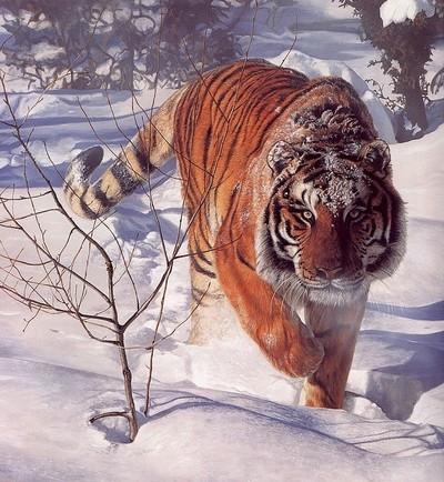 terri-isaak_tigr-tigr.jpg